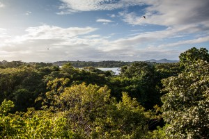View of the jungle and water from Jicaro, Nicaragua